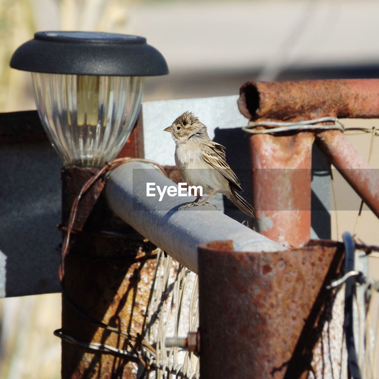 Bird Perching By Rusty Metal