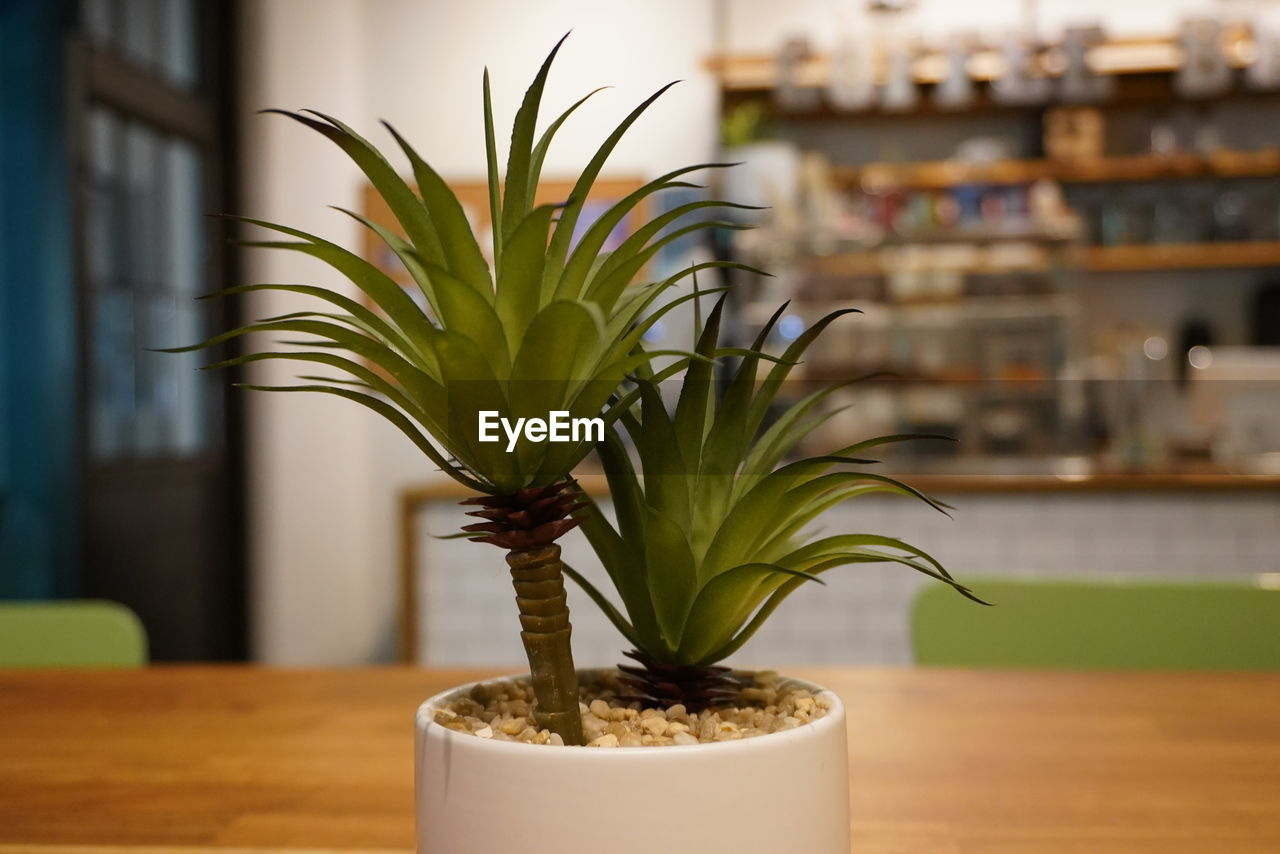 indoors, plant, no people, focus on foreground, table, leaf, green color, potted plant, close-up, growth, plant part, nature, home interior, home, selective focus, day, freshness, domestic room, wood - material, houseplant, flower pot
