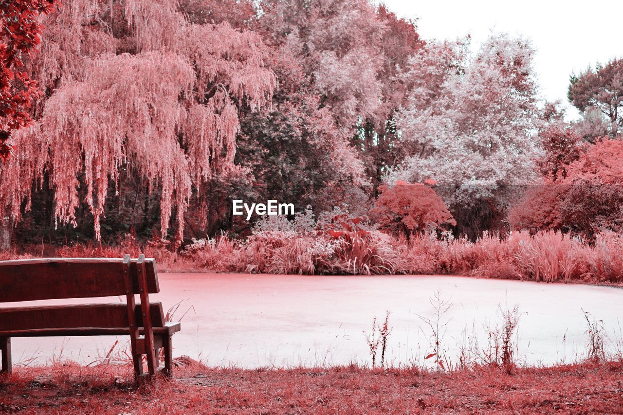 tree, plant, beauty in nature, growth, nature, tranquility, day, no people, seat, tranquil scene, land, bench, pink color, scenics - nature, park, cold temperature, field, snow, lake, outdoors, cherry blossom, cherry tree, park bench
