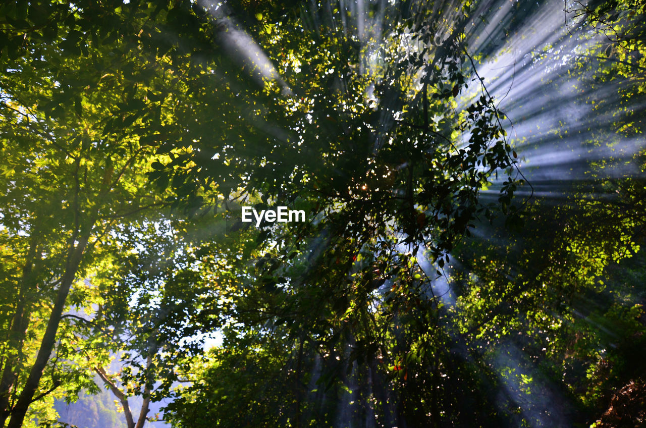 tree, growth, nature, green color, no people, low angle view, day, sunlight, outdoors, beauty in nature, freshness, leaf, branch