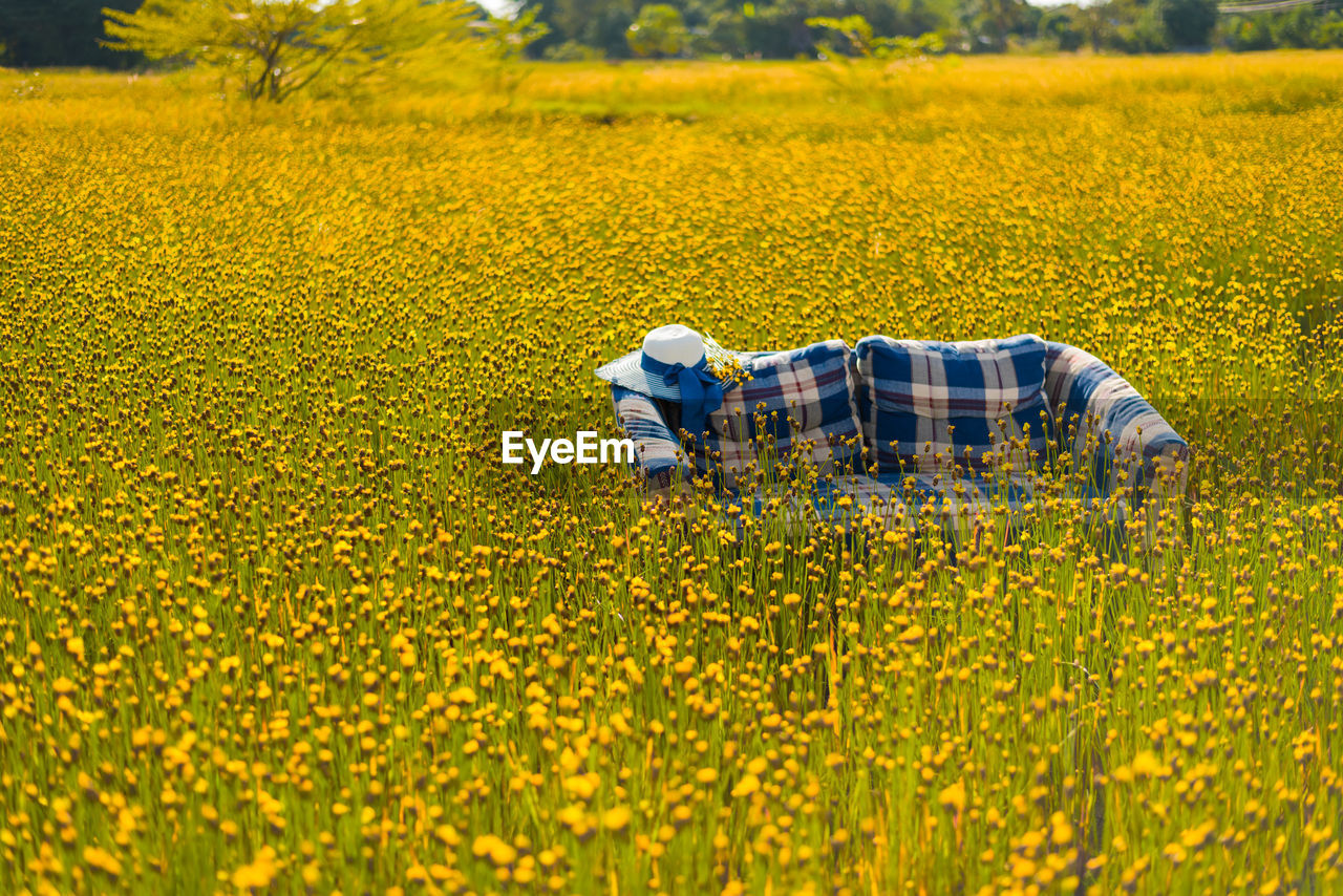 High angle view of sofa with hat amidst yellow crops on farm