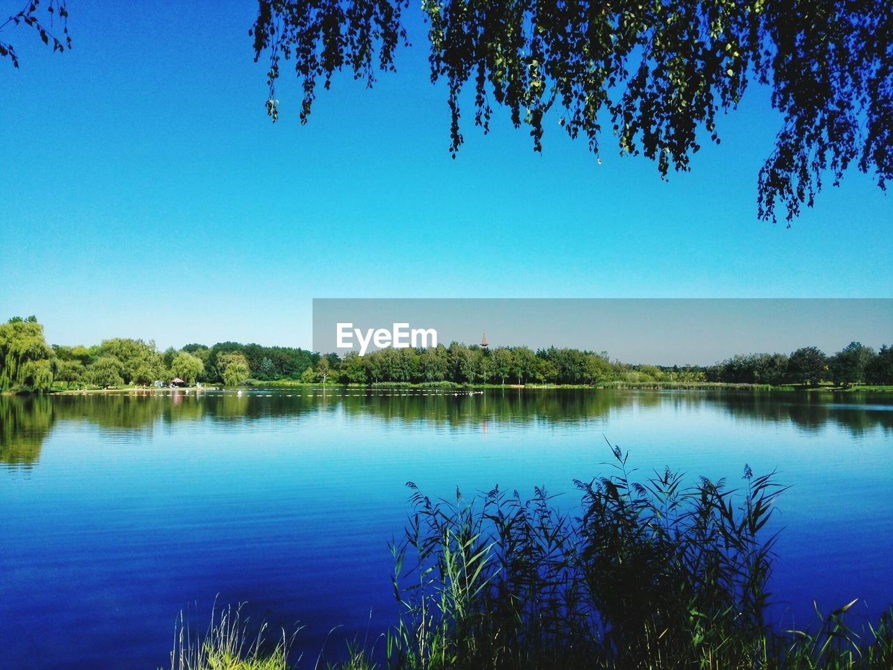 water, tree, reflection, blue, lake, nature, beauty in nature, tranquility, tranquil scene, clear sky, outdoors, growth, scenics, no people, day, plant, sky