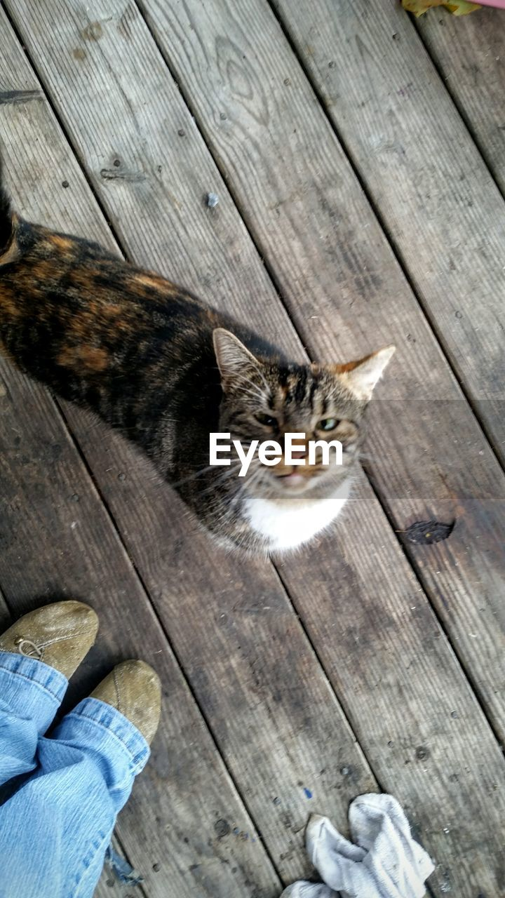 wood - material, domestic cat, domestic animals, pets, hardwood floor, high angle view, mammal, animal themes, one animal, feline, human body part, sitting, day, outdoors, human hand, one person, people