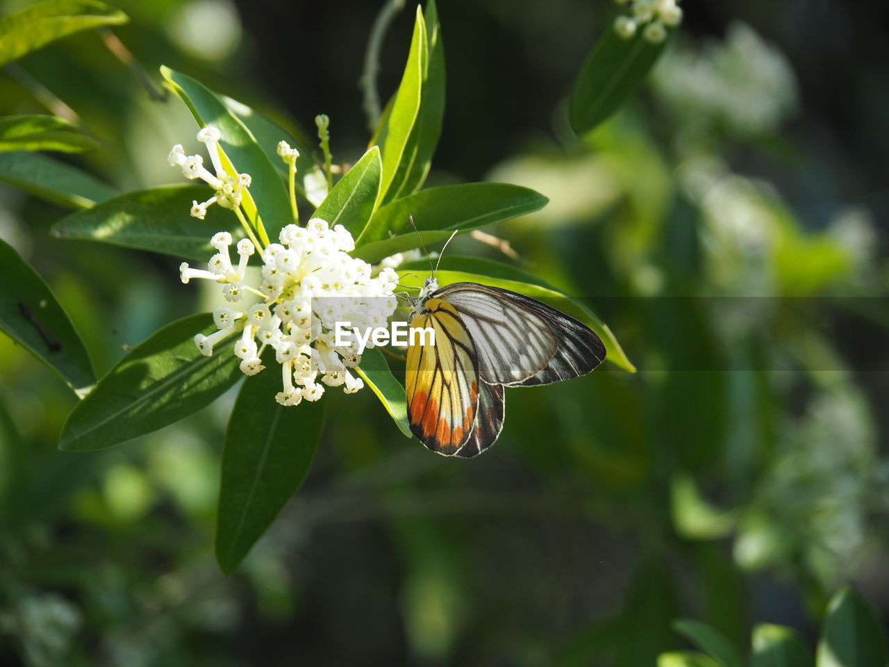 flower, flowering plant, plant, beauty in nature, fragility, vulnerability, freshness, growth, close-up, focus on foreground, flower head, petal, nature, green color, day, invertebrate, insect, inflorescence, no people, animal wildlife, outdoors, pollen, animal wing, butterfly - insect, pollination