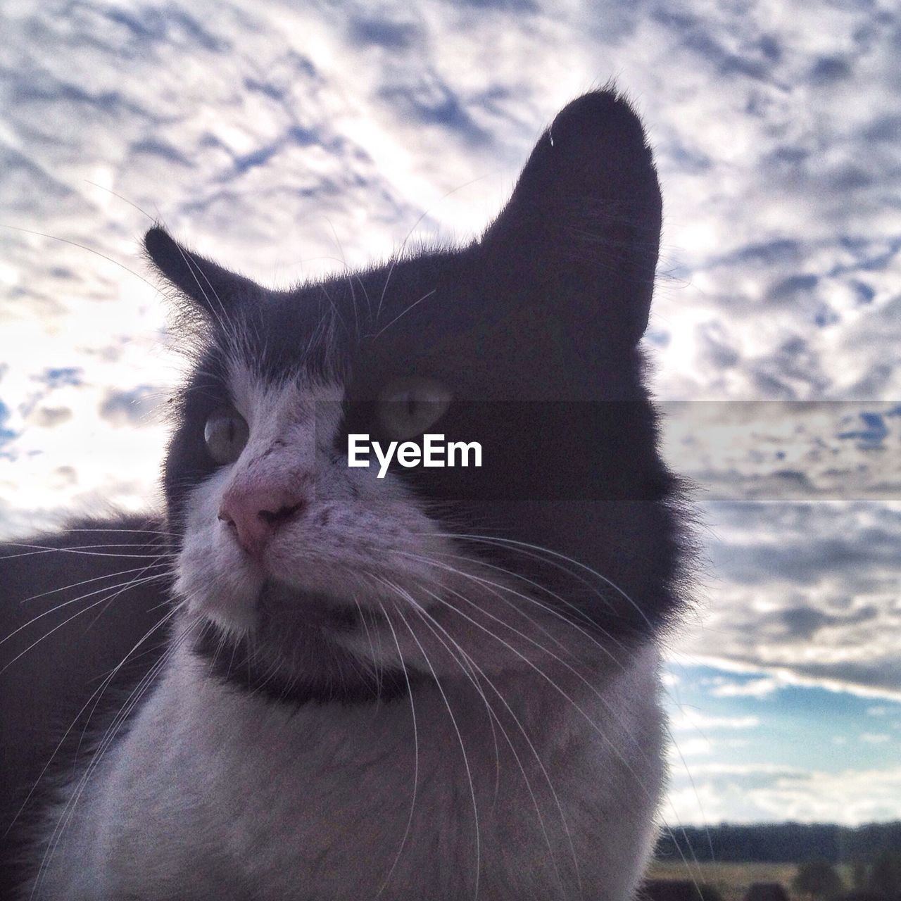 Close-Up Of Cat Looking Away Against Sky