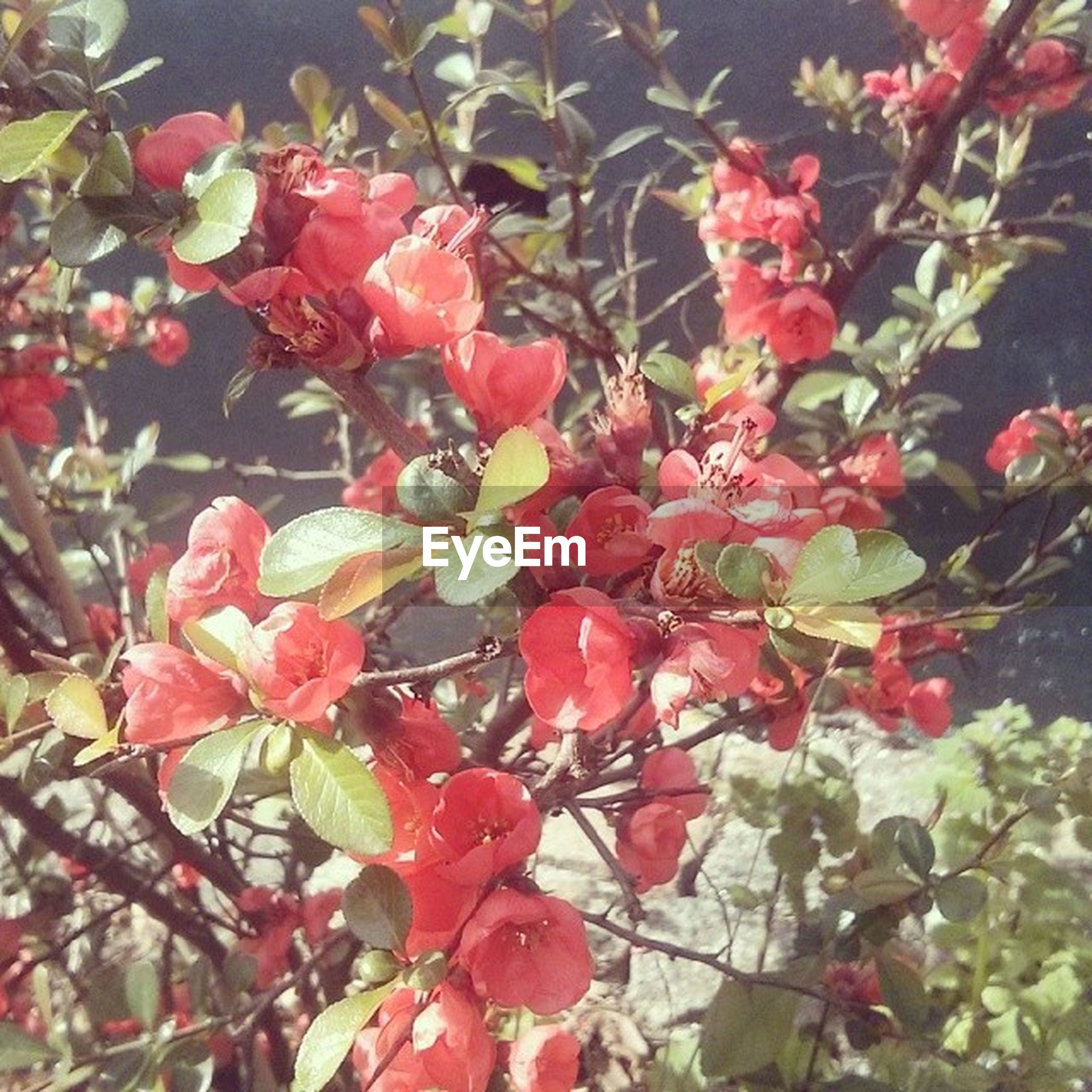 flower, growth, freshness, branch, red, beauty in nature, nature, fragility, leaf, low angle view, pink color, tree, petal, close-up, blossom, blooming, day, plant, outdoors, in bloom
