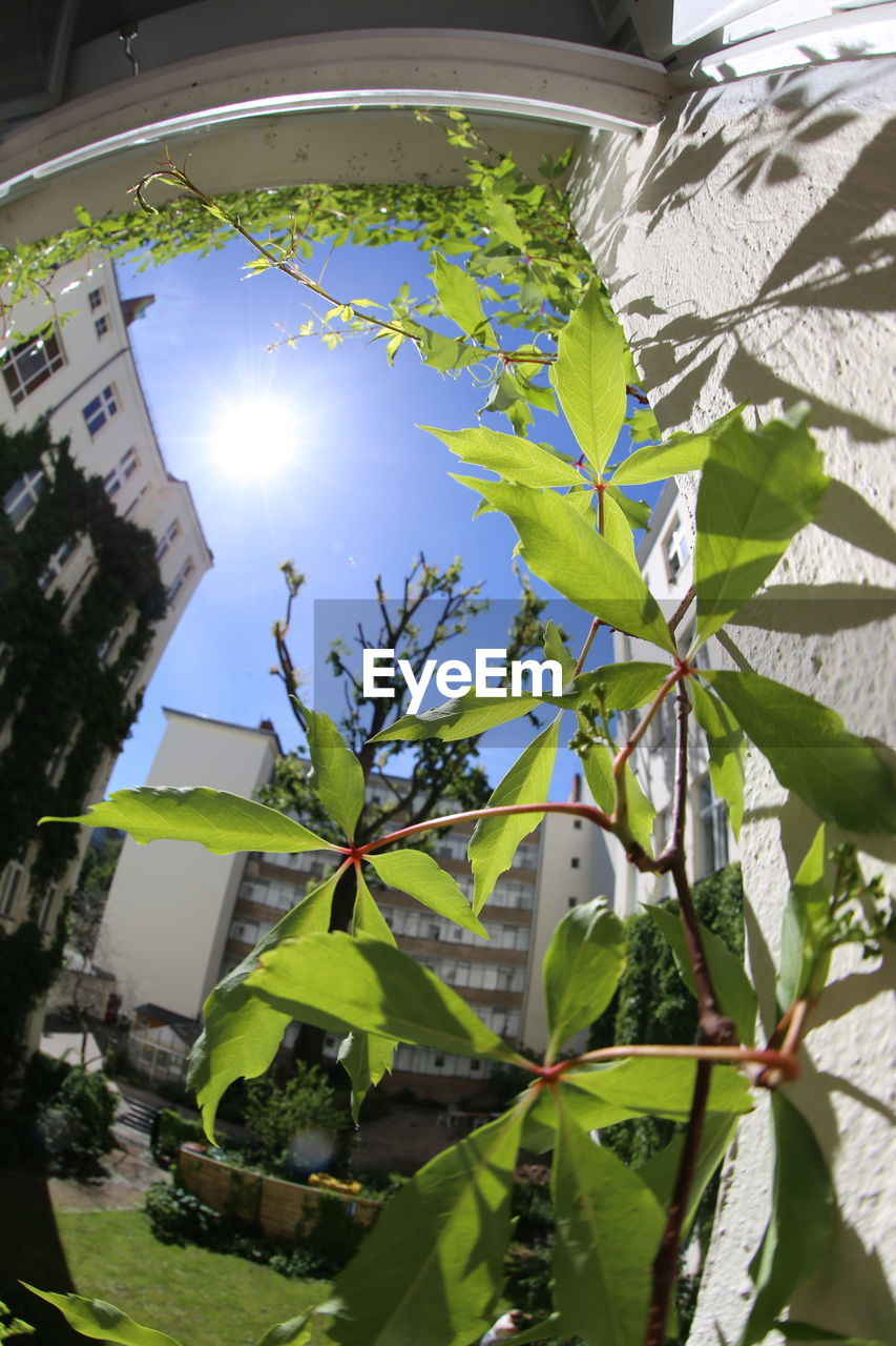 leaf, plant, growth, sunlight, green color, lens flare, nature, low angle view, no people, day, sun, outdoors, architecture, tree, building exterior, fragility, built structure, close-up, beauty in nature, sky
