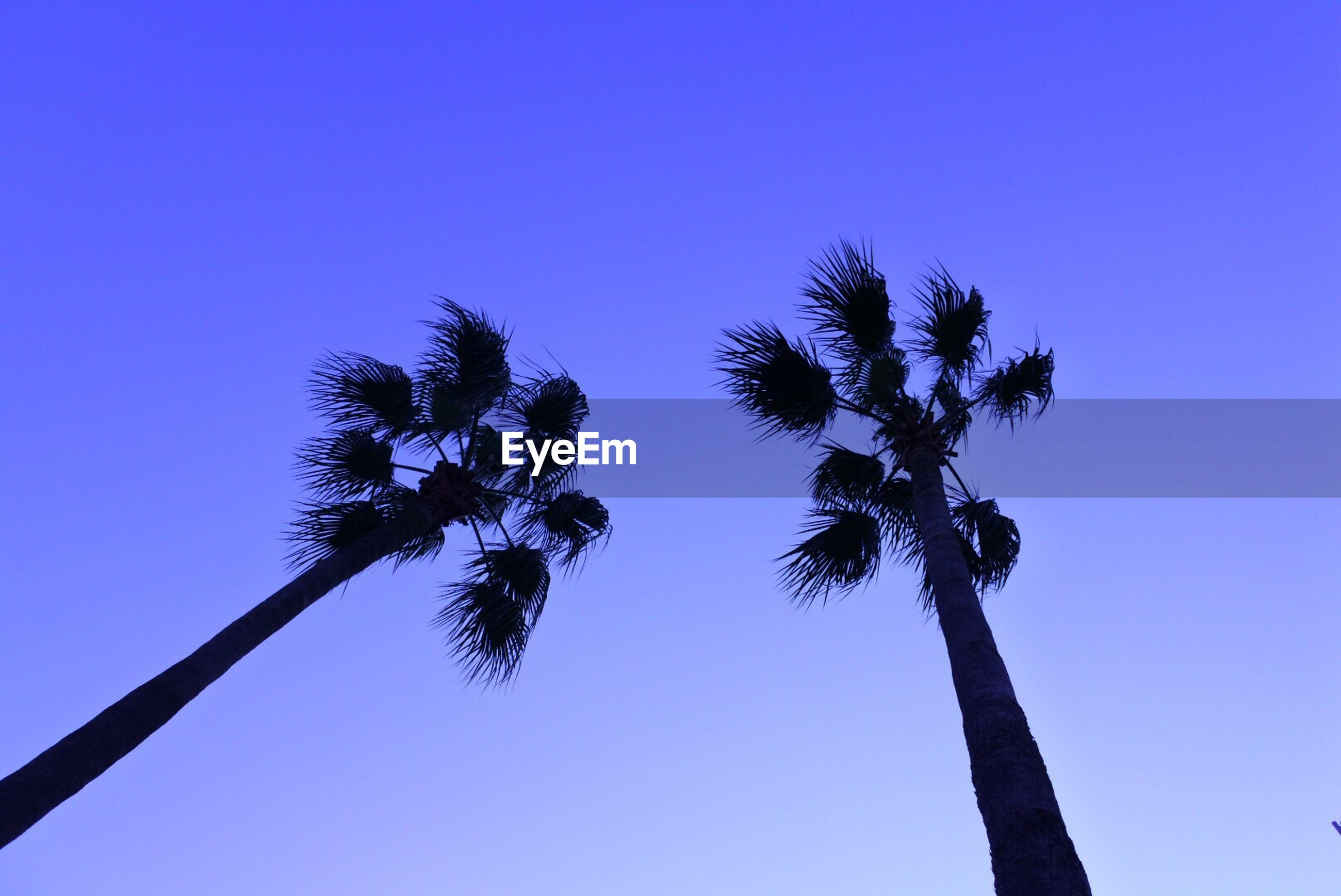 LOW ANGLE VIEW OF SILHOUETTE TREE AGAINST BLUE SKY