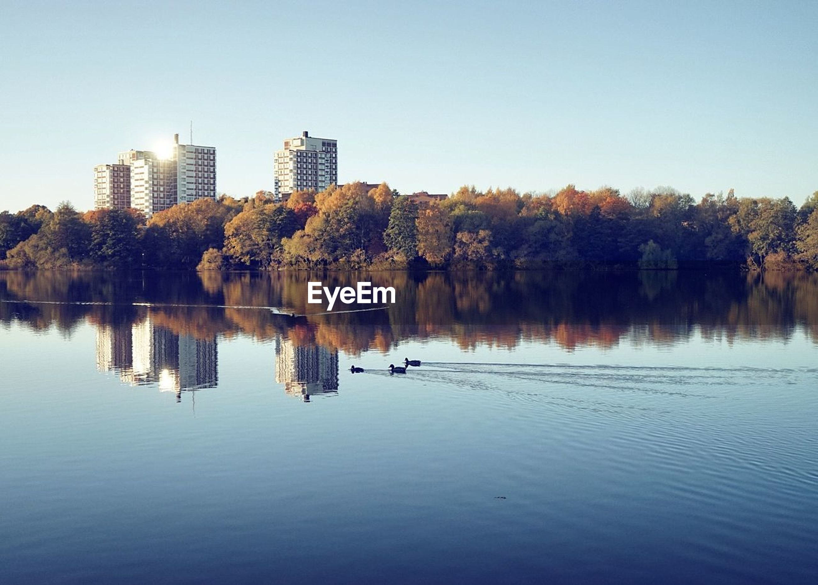 reflection, tree, architecture, lake, skyscraper, waterfront, building exterior, water, nature, clear sky, outdoors, built structure, no people, tranquility, beauty in nature, scenics, day, autumn, sky, city, urban skyline, cityscape