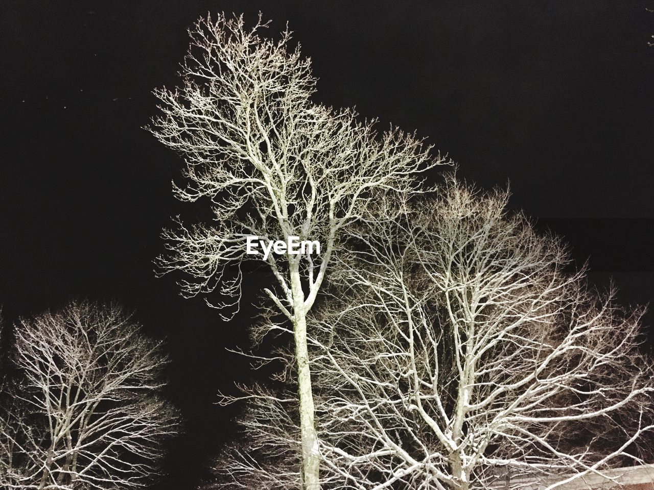 night, nature, no people, illuminated, beauty in nature, growth, plant, outdoors, tree, bare tree, sky, close-up, clear sky, black background