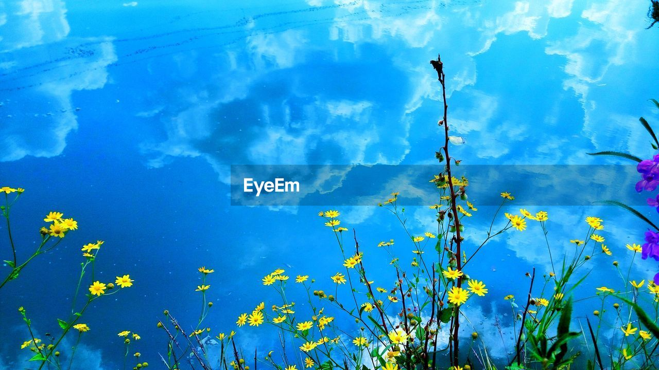 water, blue, nature, day, reflection, beauty in nature, lake, outdoors, plant, tranquility, no people, growth, tranquil scene, flower, floating on water, close-up, fragility, sky, freshness