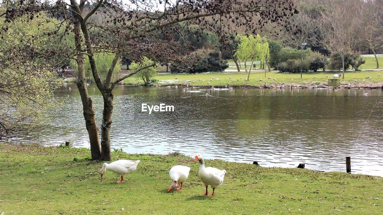 BIRDS ON LAKESHORE