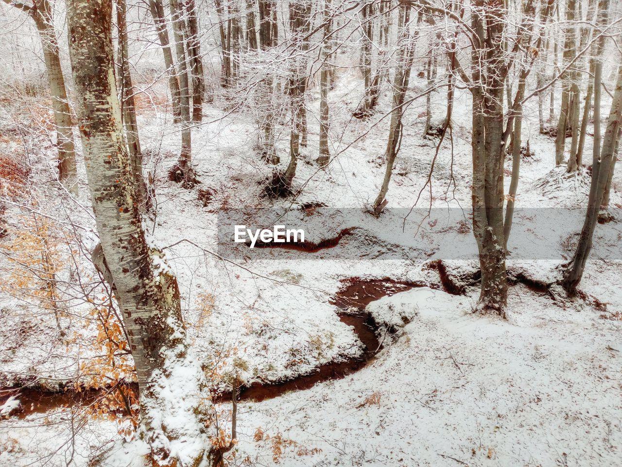 FULL FRAME SHOT OF TREE TRUNK IN WINTER