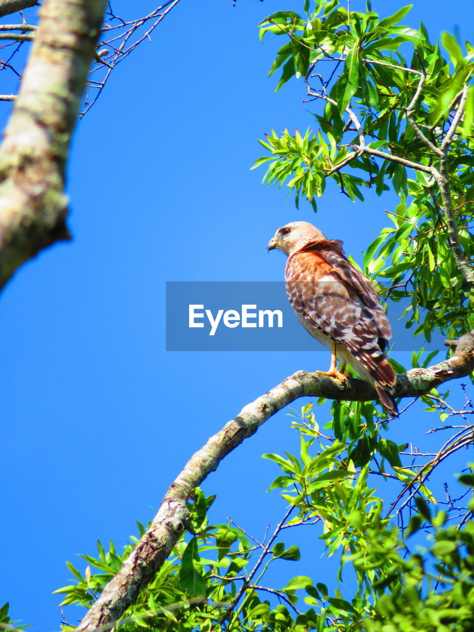 animal themes, vertebrate, bird, tree, plant, animal, animal wildlife, animals in the wild, perching, one animal, low angle view, branch, nature, sky, clear sky, no people, blue, growth, day, sunlight, outdoors