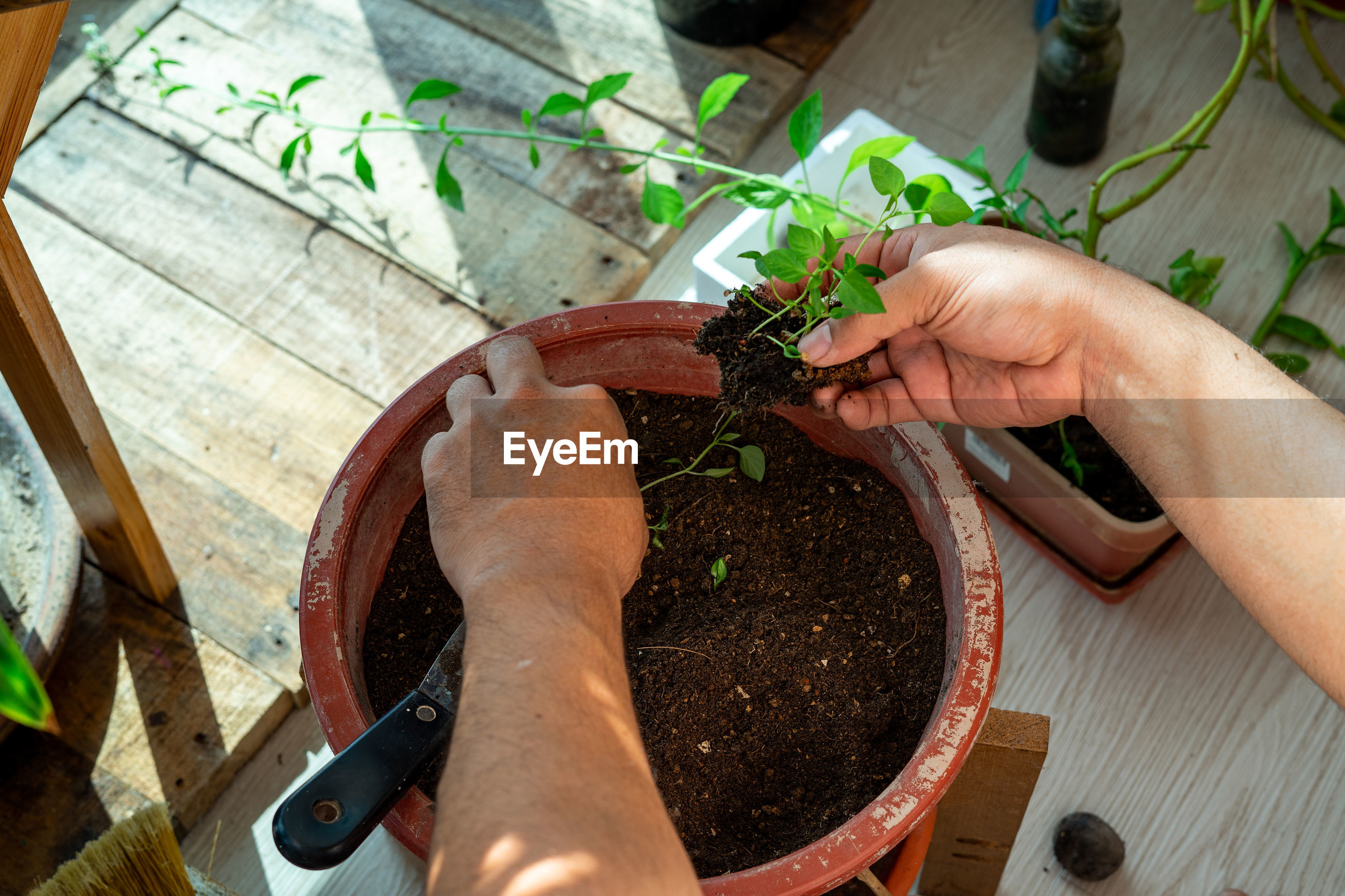 HIGH ANGLE VIEW OF PERSON HAND HOLDING PLANT