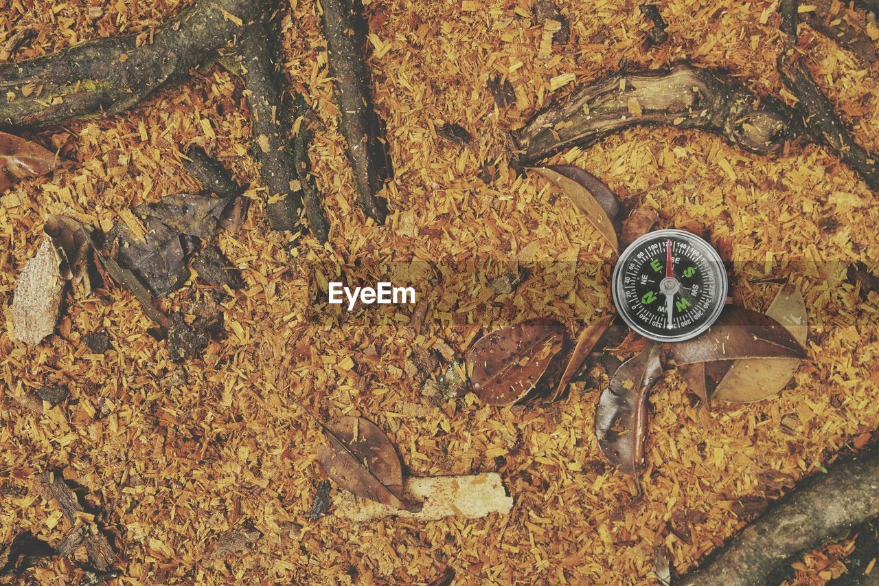 autumn, leaf, high angle view, change, nature, no people, day, time, outdoors, close-up, tree, clock