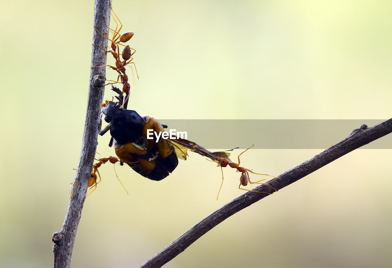 Red ant on branch