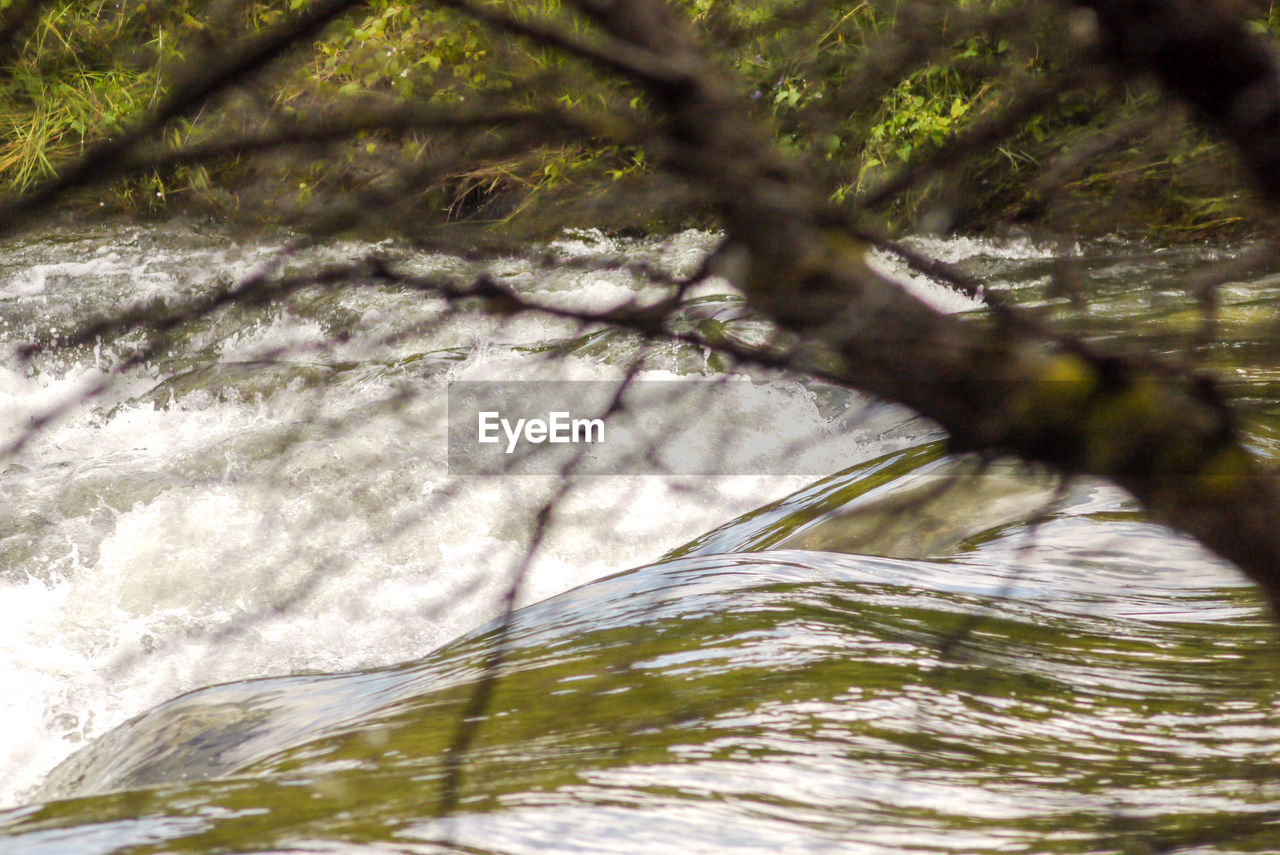 plant, tree, day, no people, nature, selective focus, motion, blurred motion, beauty in nature, growth, branch, sunlight, water, outdoors, close-up, land, tree trunk, forest, trunk, flowing water, flowing