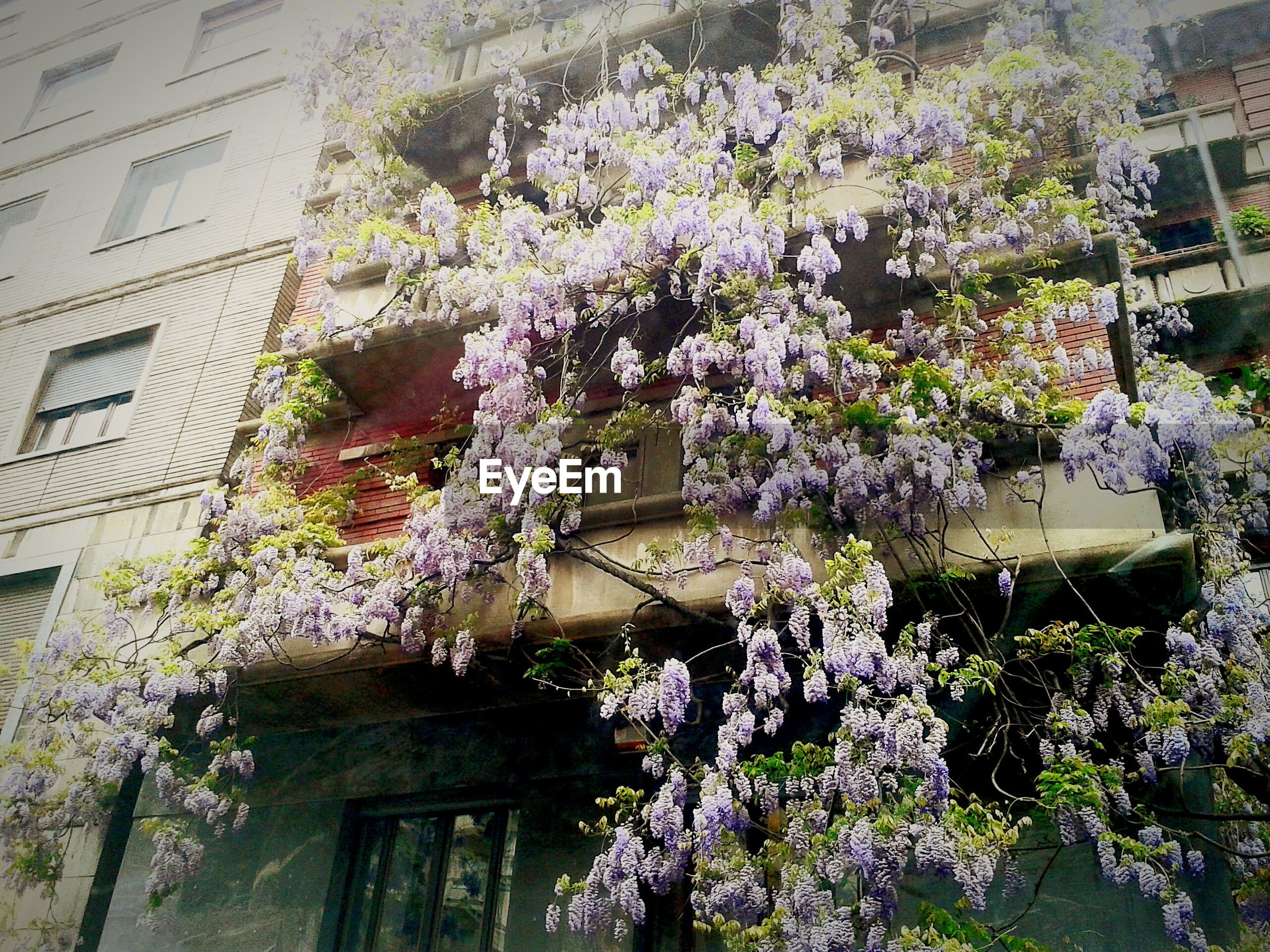 Low angle view of flowers on plant outside building