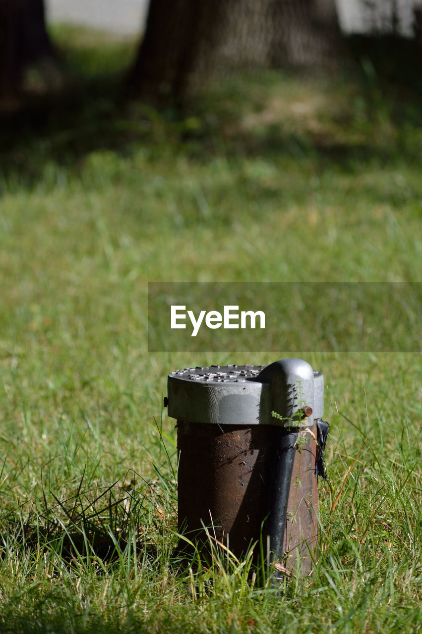 grass, field, no people, day, outdoors, growth, nature, close-up