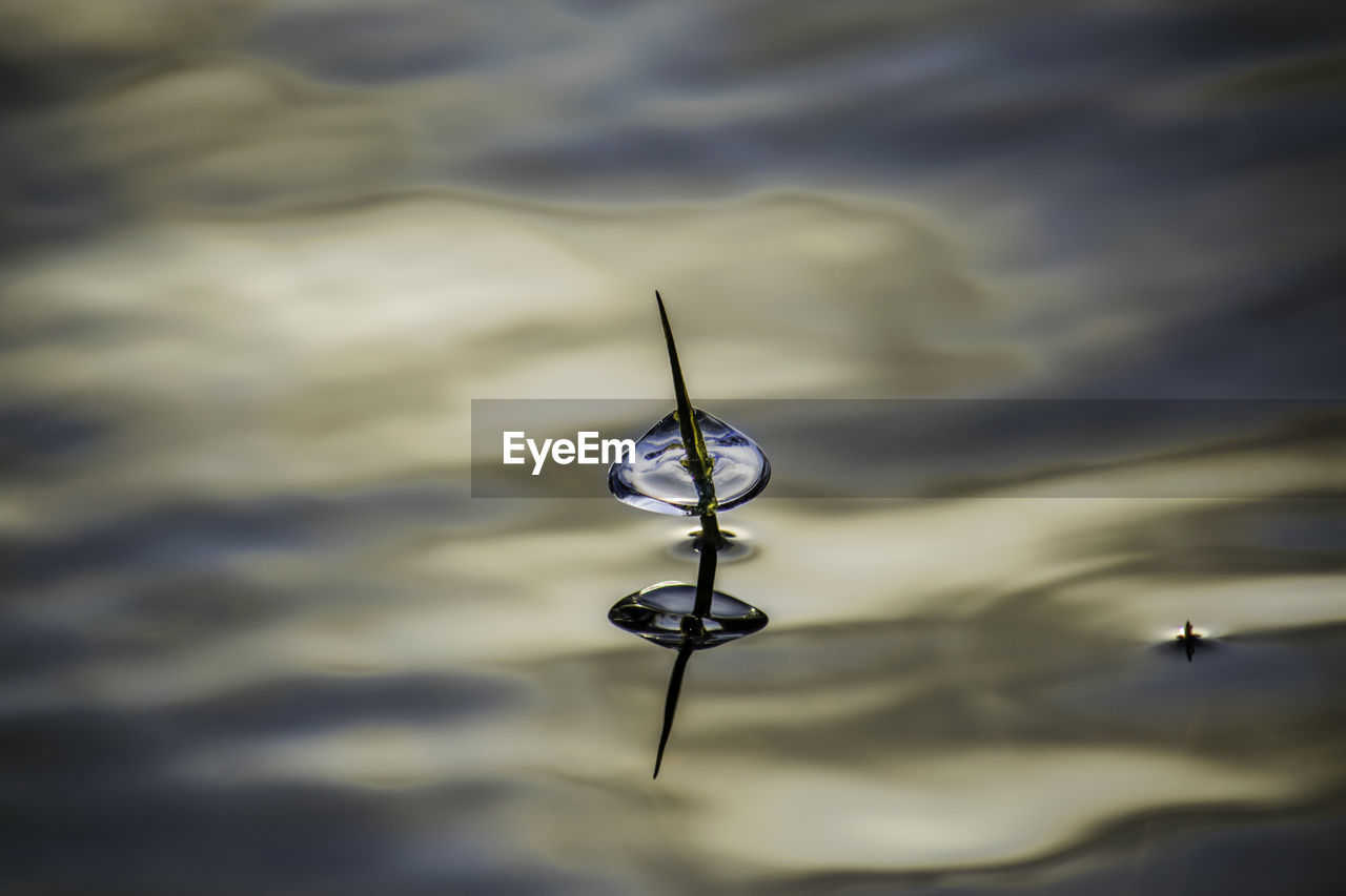 reflection, water, no people, lake, outdoors, close-up, nature, day