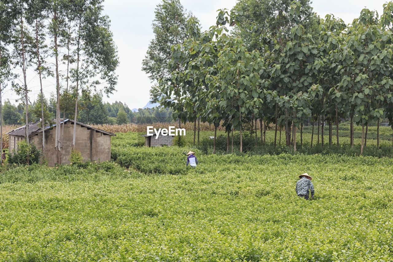 Farmers on field