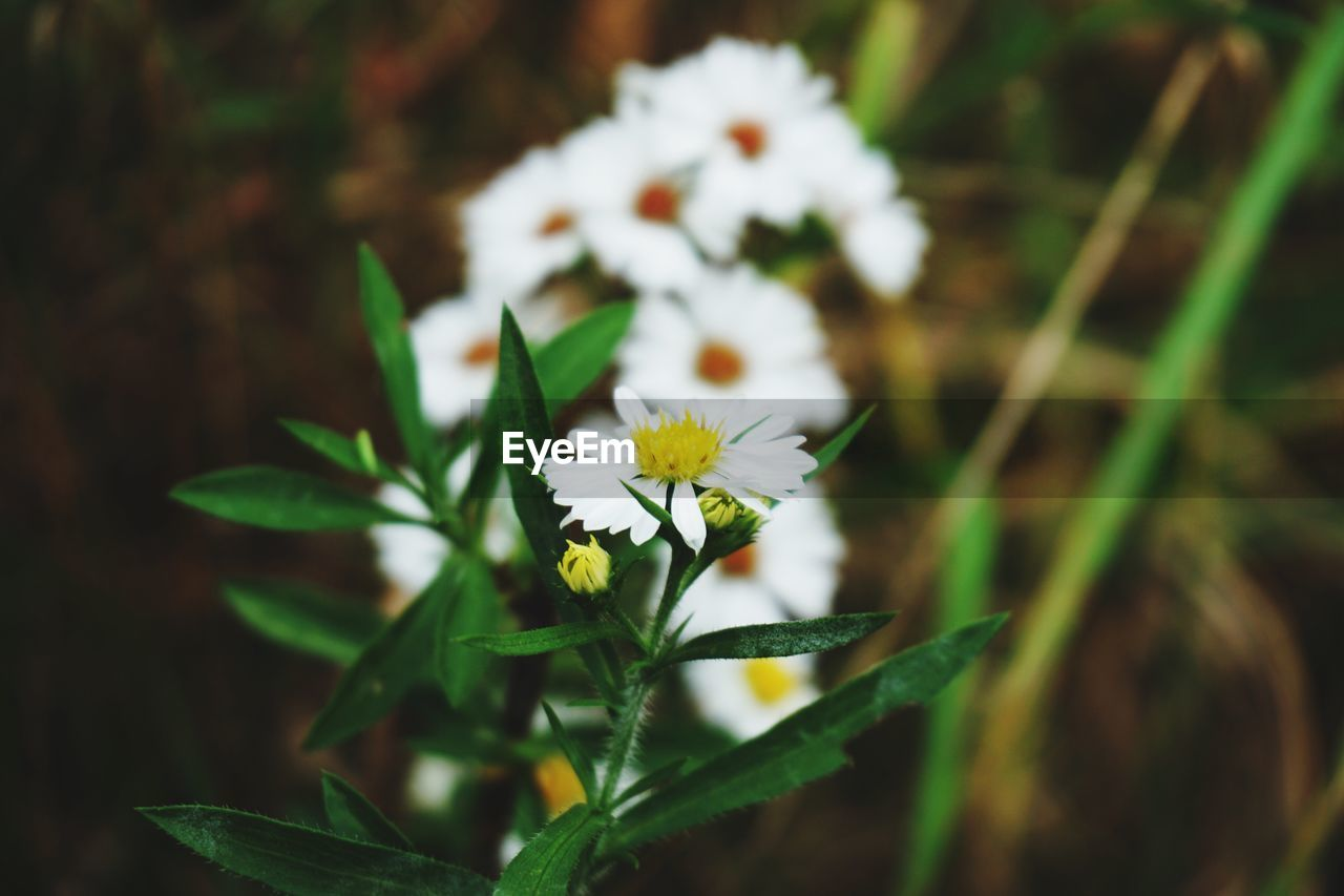 flower, growth, nature, fragility, freshness, plant, petal, white color, beauty in nature, flower head, green color, blooming, no people, leaf, day, close-up, outdoors