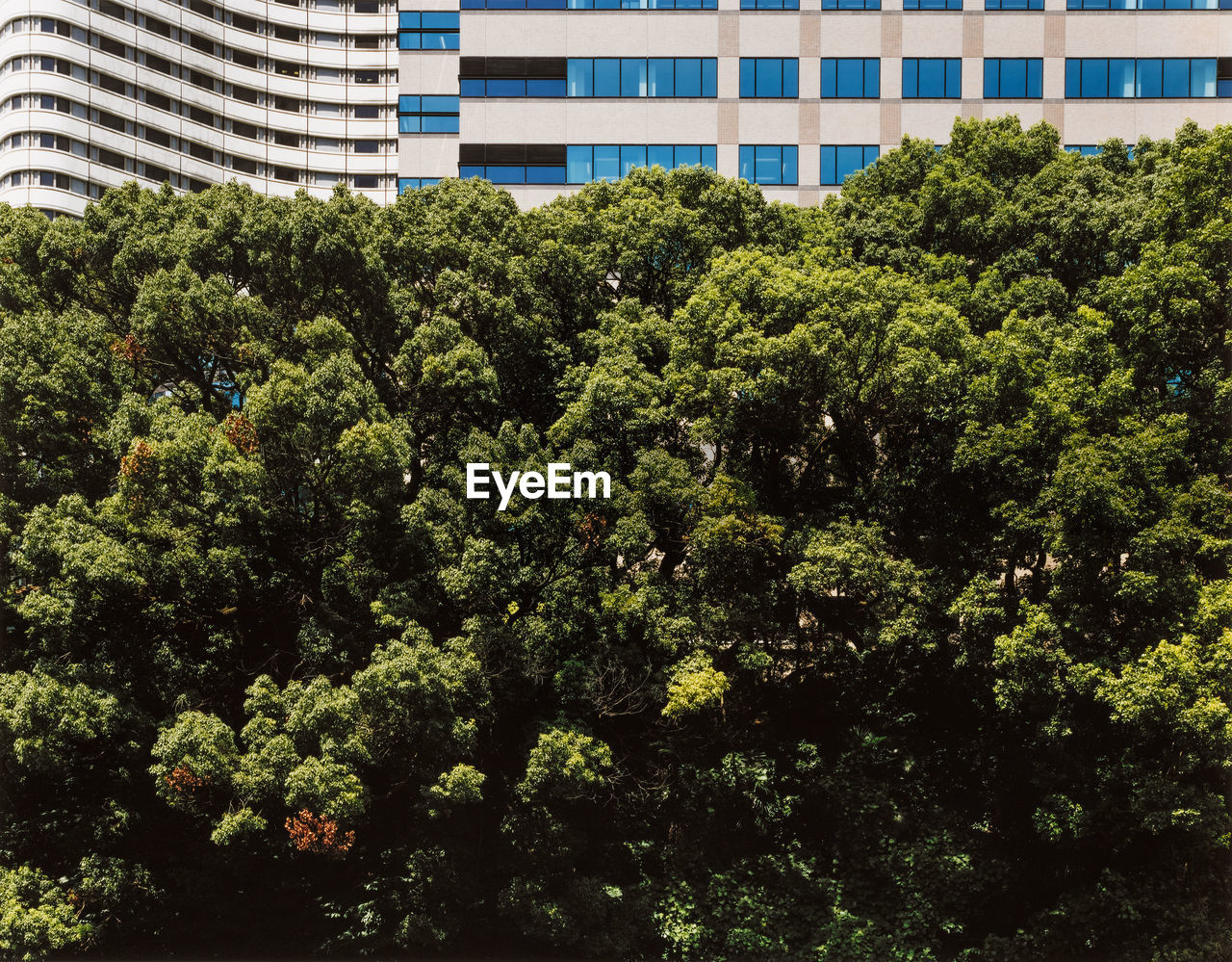Trees against building