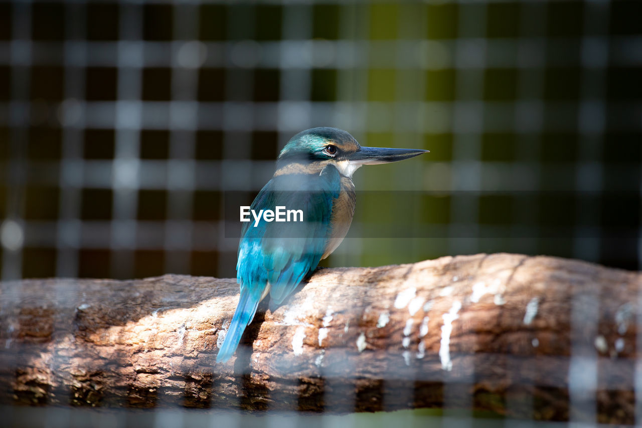 animal themes, animal, vertebrate, bird, animal wildlife, one animal, animals in the wild, perching, no people, close-up, day, focus on foreground, nature, blue, outdoors, selective focus, beak, kingfisher, water, turquoise colored