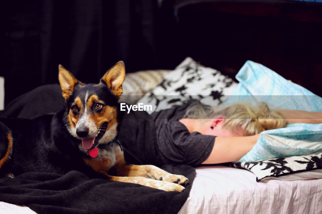 Pembroke Welsh Corgi Sitting While Woman Sleeping On Bed