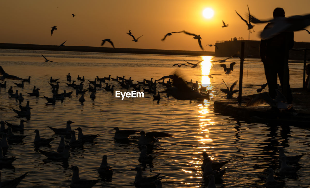 bird, water, sunset, vertebrate, animals in the wild, sky, animal themes, animal, large group of animals, group of animals, silhouette, animal wildlife, beauty in nature, flying, sea, scenics - nature, reflection, nature, orange color, flock of birds, outdoors, horizon over water, seagull