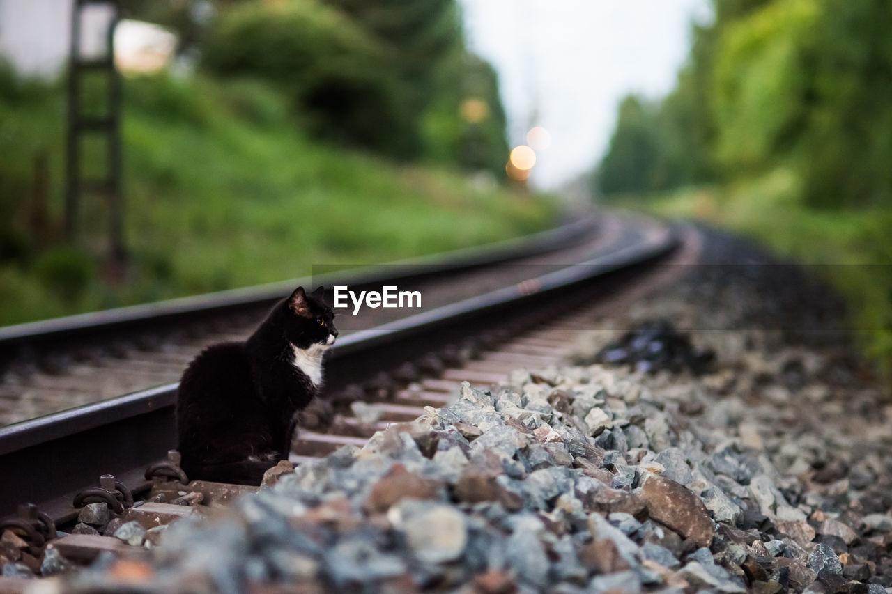 Cat sitting on railroad track