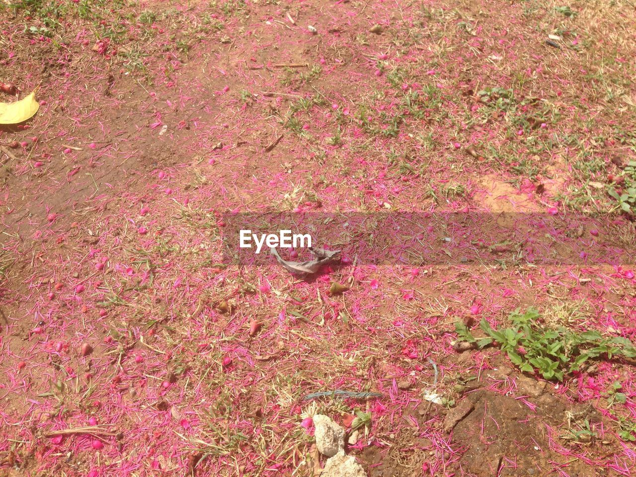 pink color, high angle view, plant, no people, animal, nature, day, animal themes, vertebrate, leaf, outdoors, full frame, plant part, beauty in nature, land, animal wildlife, one animal, field, animals in the wild, growth
