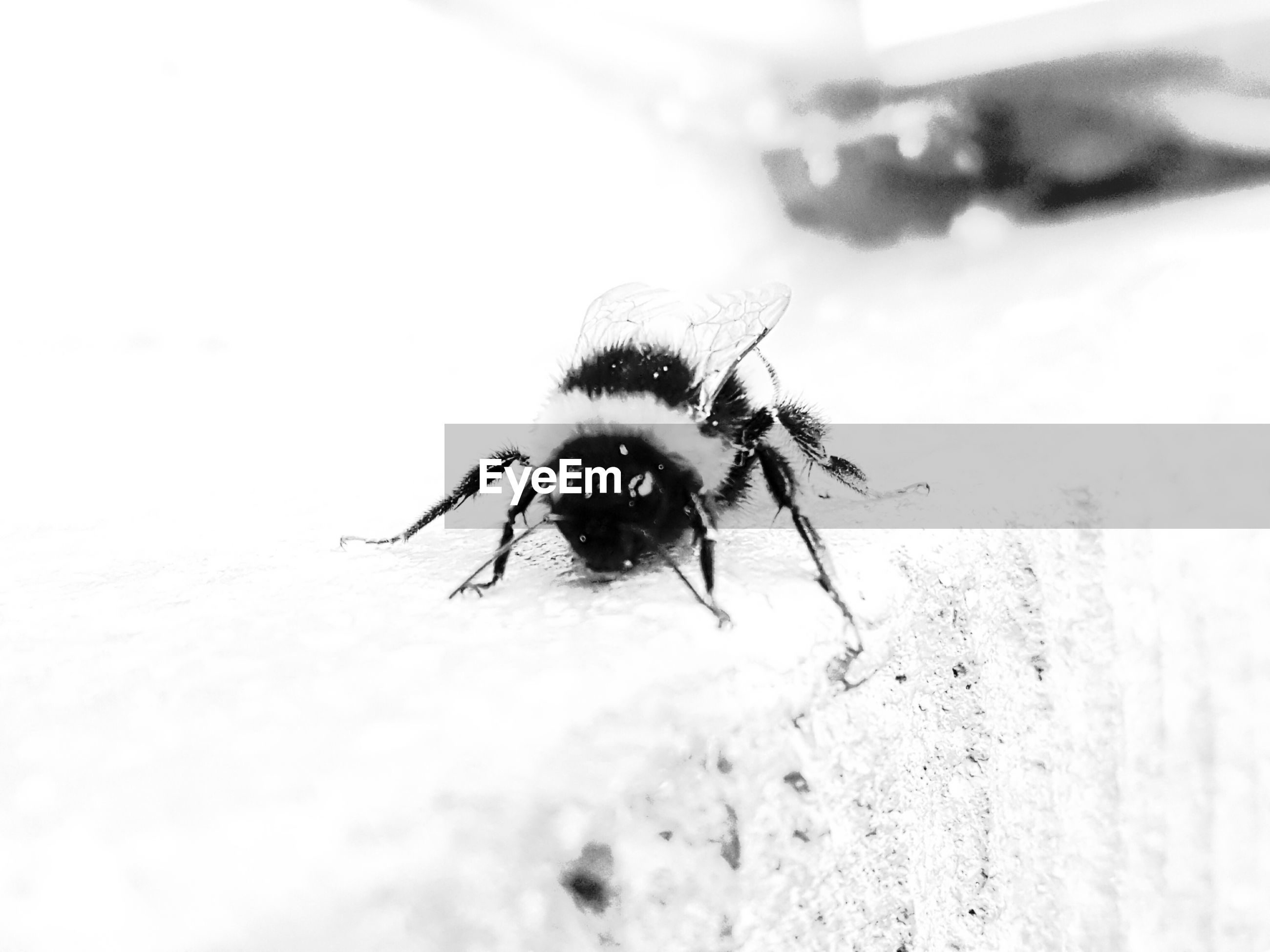 insect, animal themes, close-up, one animal, animals in the wild, no people, nature, day, outdoors, jumping spider