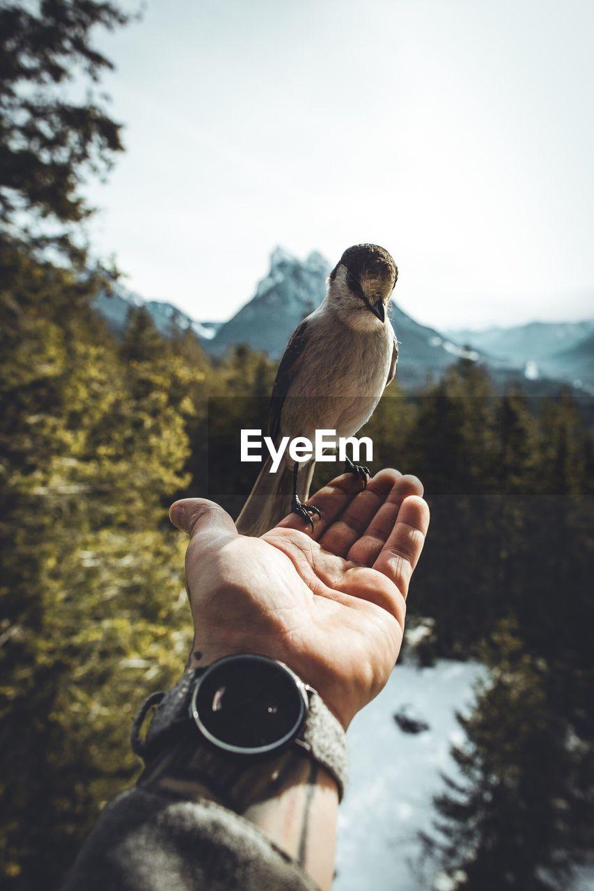 Close-Up Of Man Holding Bird Perching On Hand