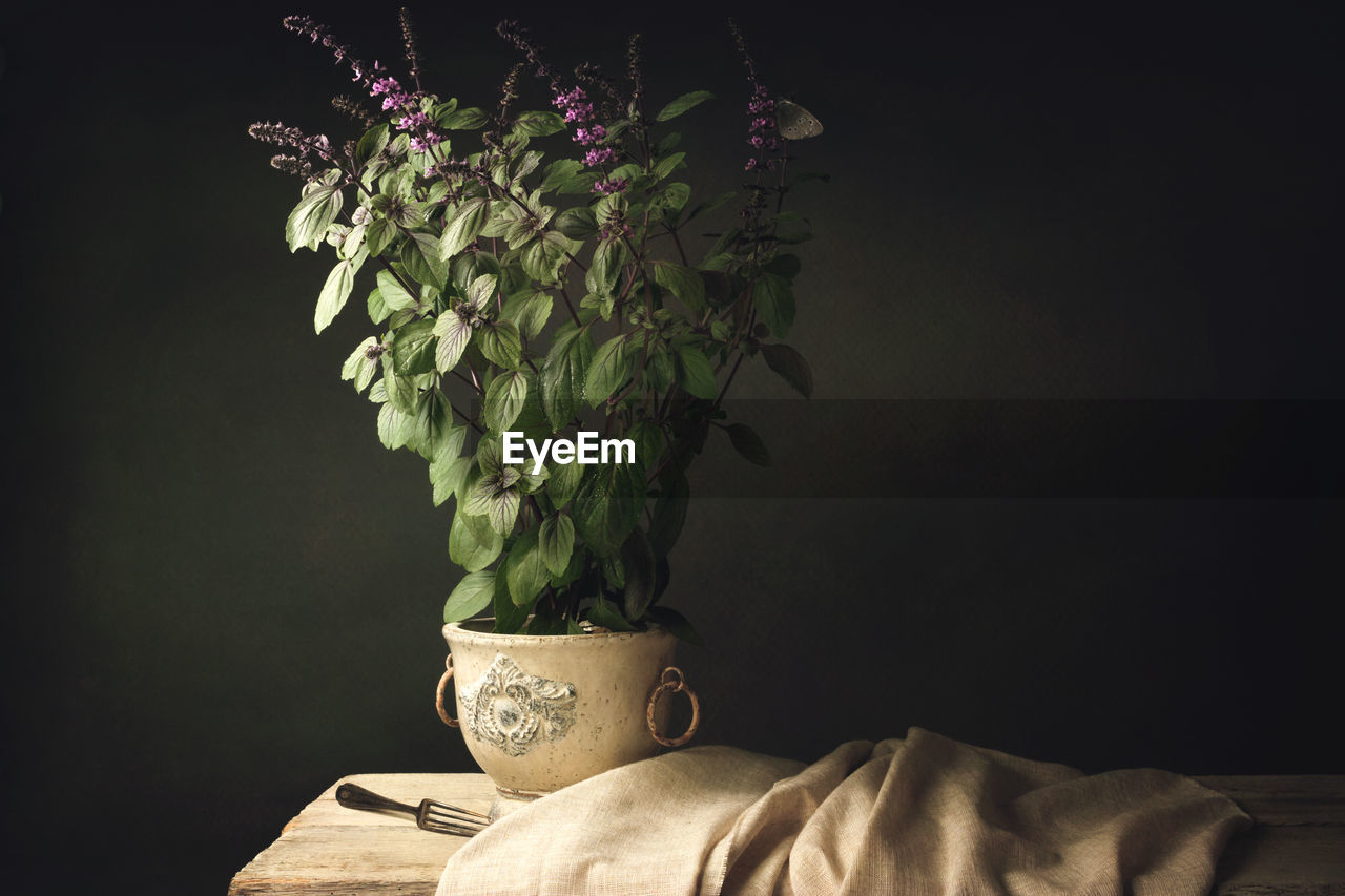 Plant Arrangement