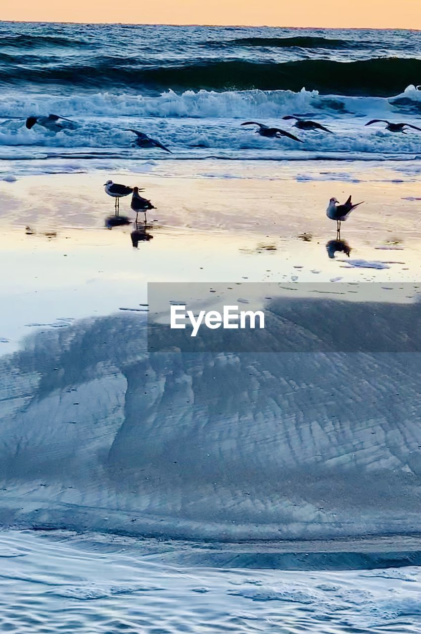 water, animal themes, animal, animals in the wild, bird, vertebrate, animal wildlife, group of animals, beauty in nature, sea, flying, nature, no people, scenics - nature, beach, mid-air, motion, day, waterfront, outdoors, seagull