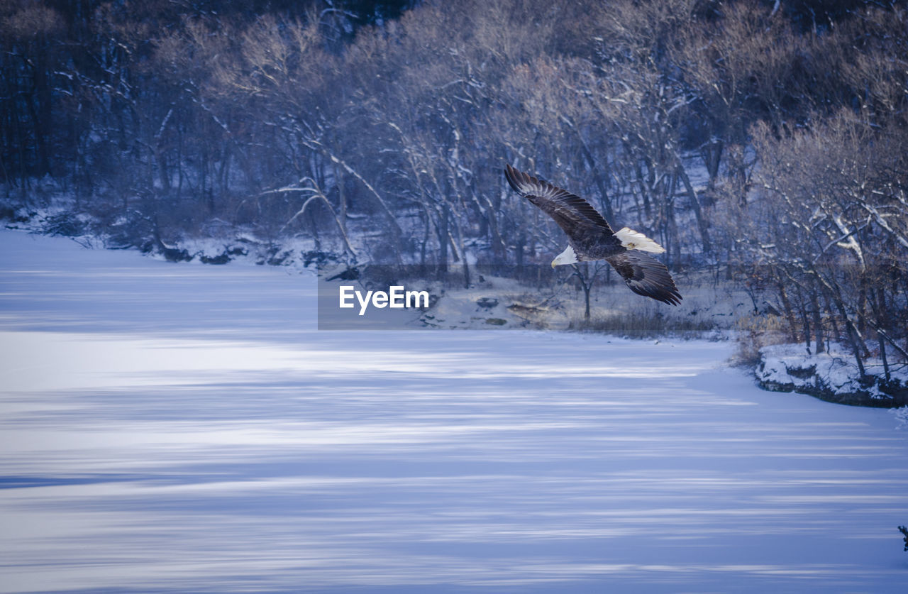 Low Angle View Of Bird Flying Over Snow Covered Landscape