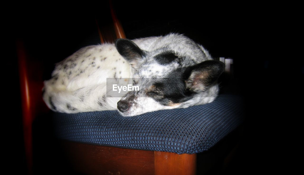 pets, domestic animals, animal themes, one animal, dog, mammal, indoors, no people, young animal, night, close-up