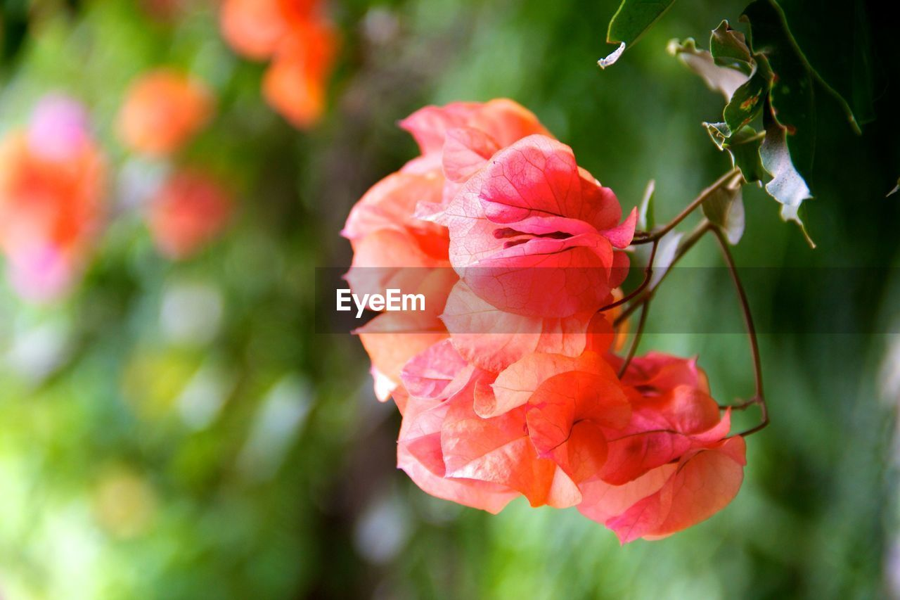 growth, nature, flower, petal, beauty in nature, blooming, plant, no people, outdoors, flower head, day, close-up