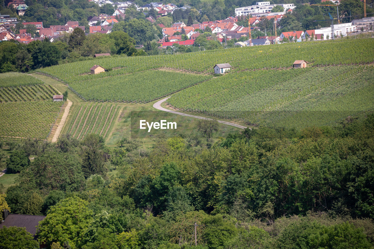 HIGH ANGLE VIEW OF VINEYARD ON FIELD