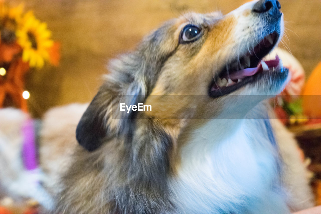 one animal, dog, animal themes, pets, mammal, domestic animals, no people, focus on foreground, close-up, day, outdoors, nature