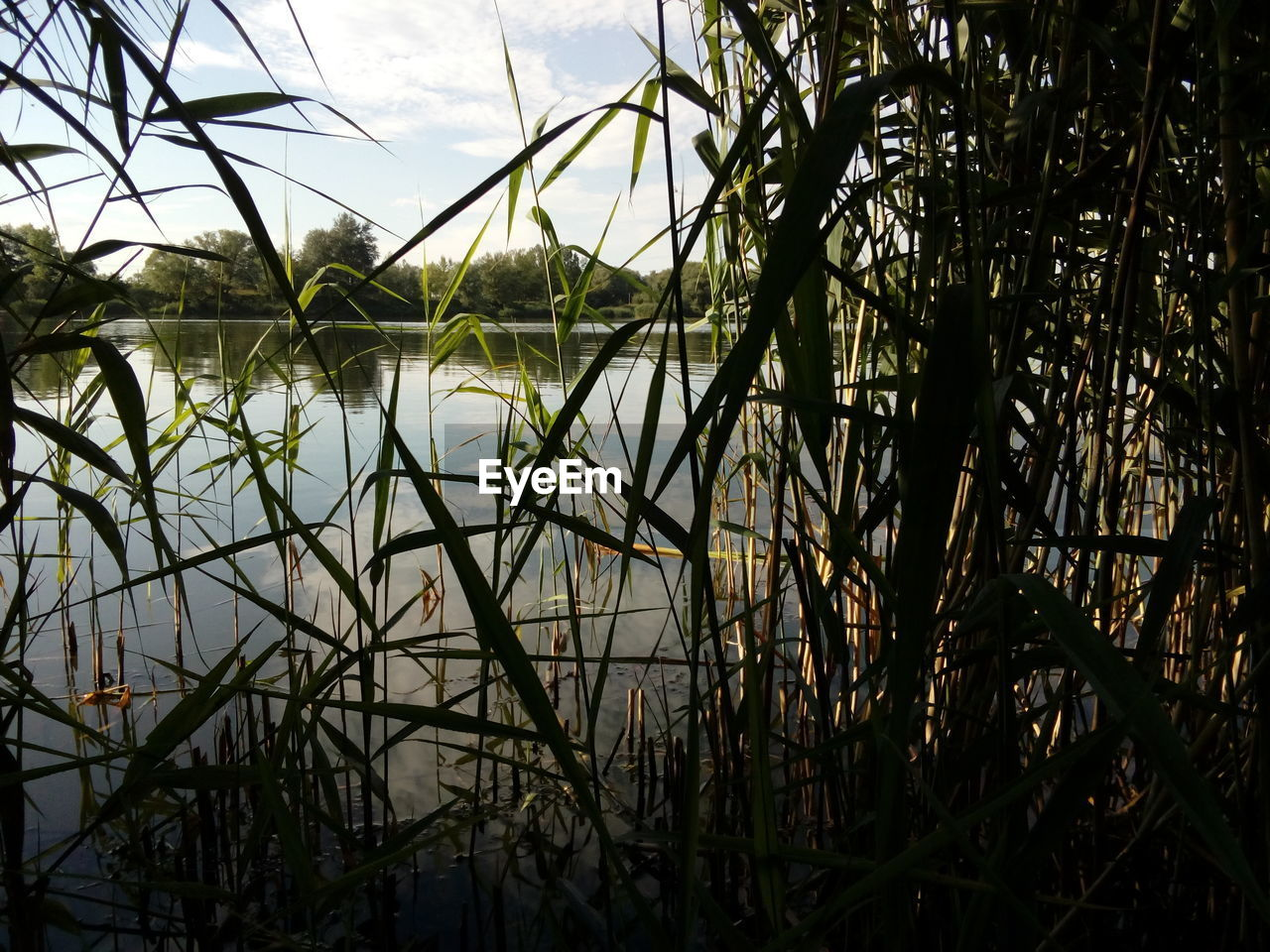 plant, no people, nature, growth, sky, tranquility, water, lake, grass, beauty in nature, day, reflection, tree, outdoors, land, tranquil scene, non-urban scene, scenics - nature, standing water, blade of grass