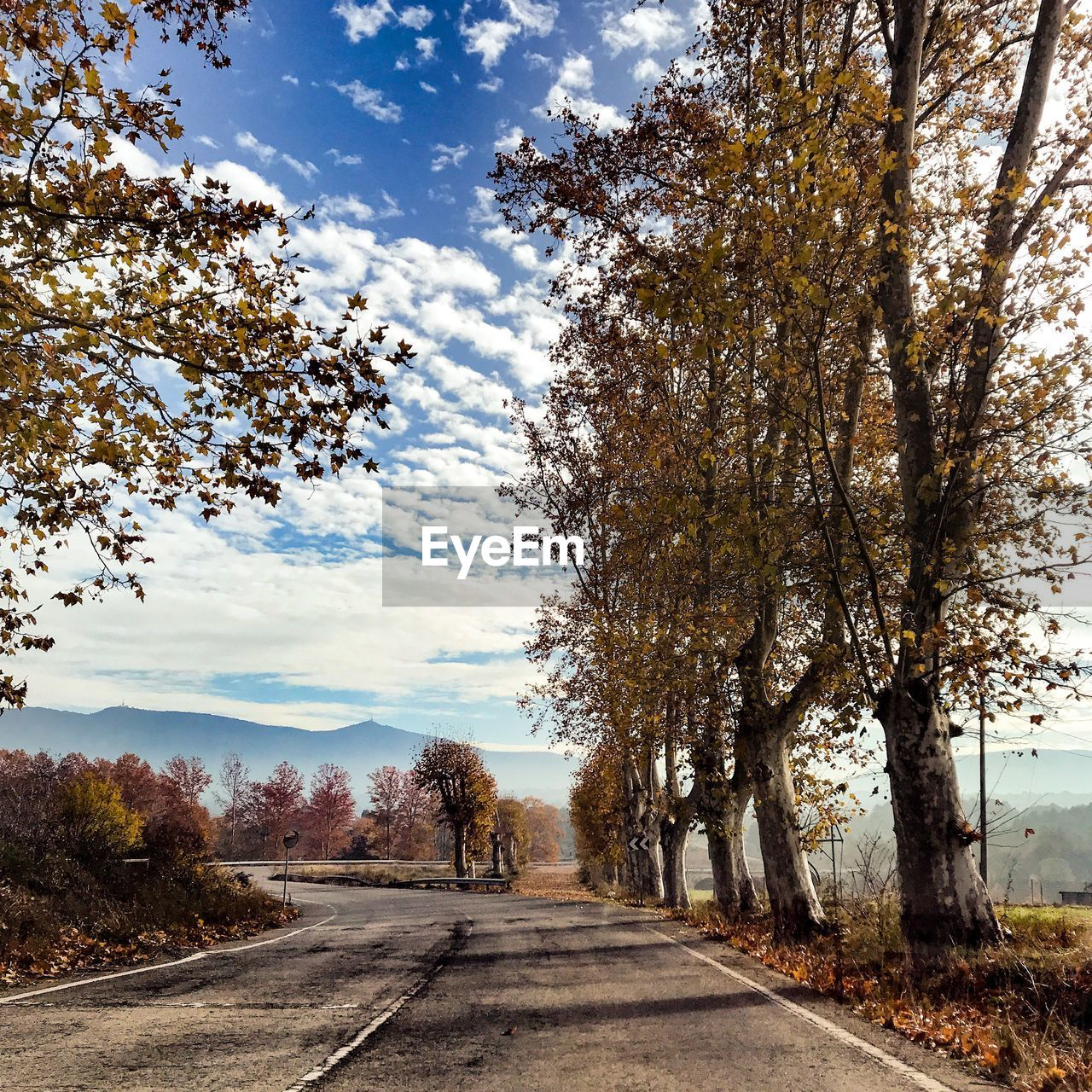 tree, the way forward, road, nature, diminishing perspective, sky, day, scenics, tranquility, tranquil scene, beauty in nature, outdoors, transportation, autumn, landscape, cloud - sky, no people, growth, branch