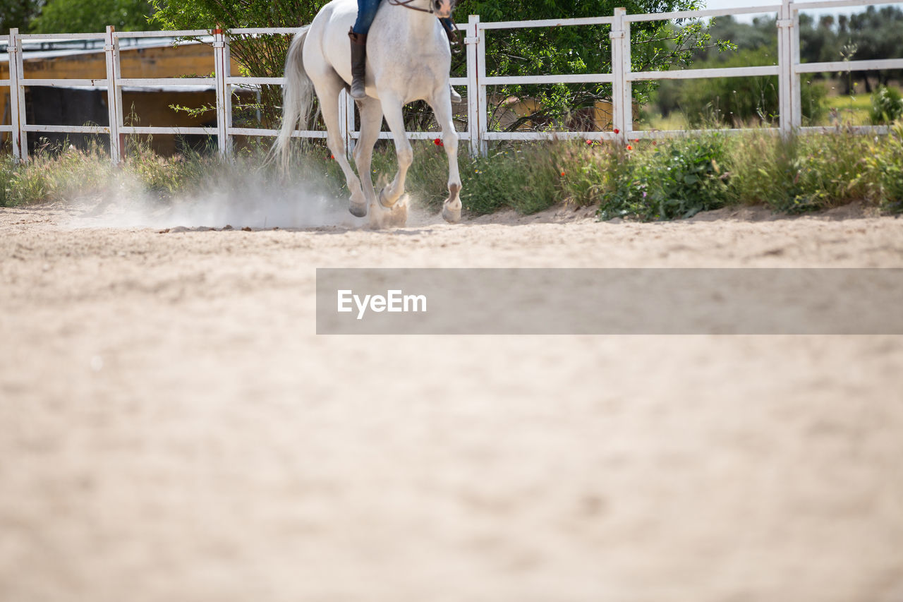 SURFACE LEVEL OF HORSE RUNNING ON FLOOR IN RANCH