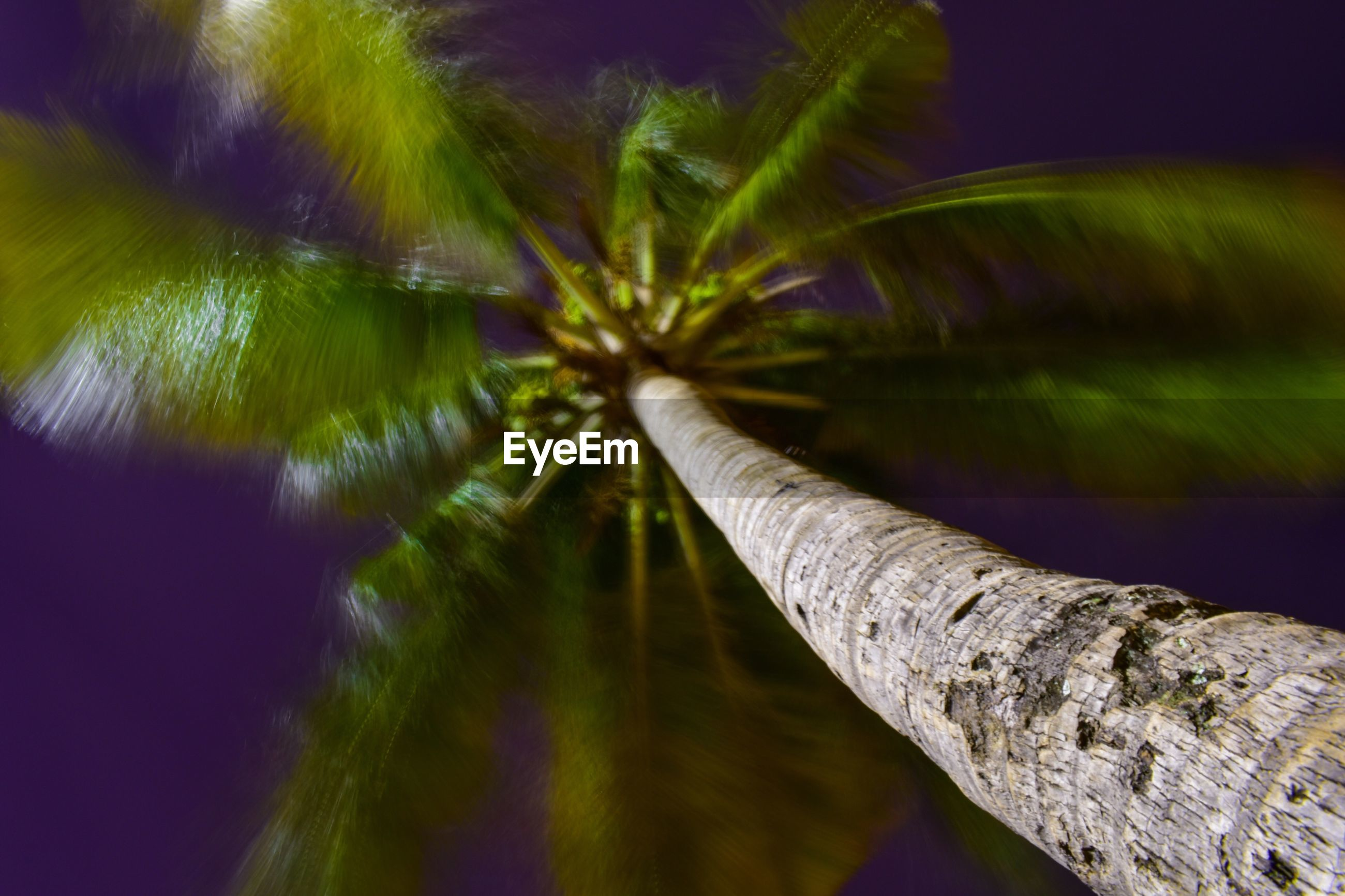 CLOSE-UP OF PALM TREE AGAINST PLANTS