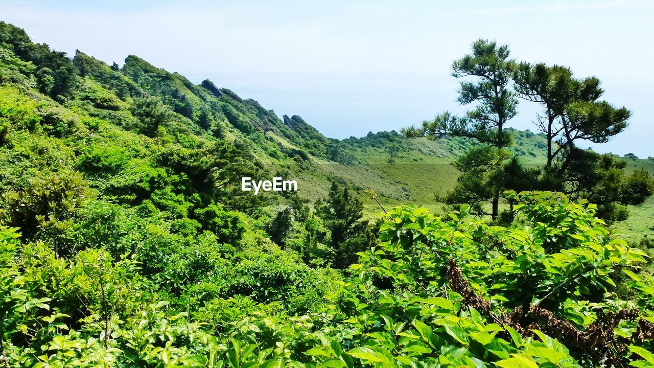 Scenic view of forest against clear sky