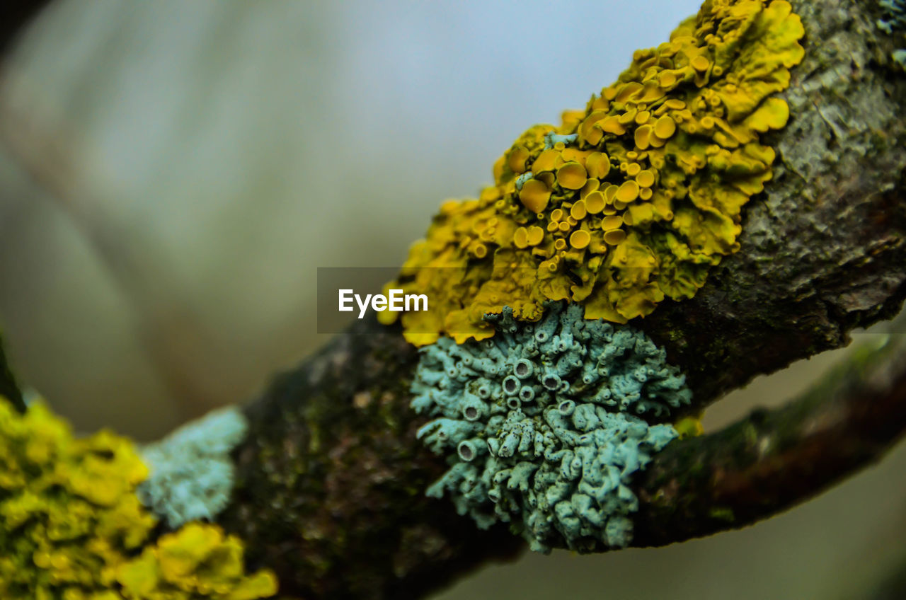 selective focus, growth, lichen, plant, close-up, moss, tree, beauty in nature, tree trunk, trunk, no people, nature, day, yellow, fungus, green color, flower, vulnerability, flowering plant, focus on foreground, outdoors
