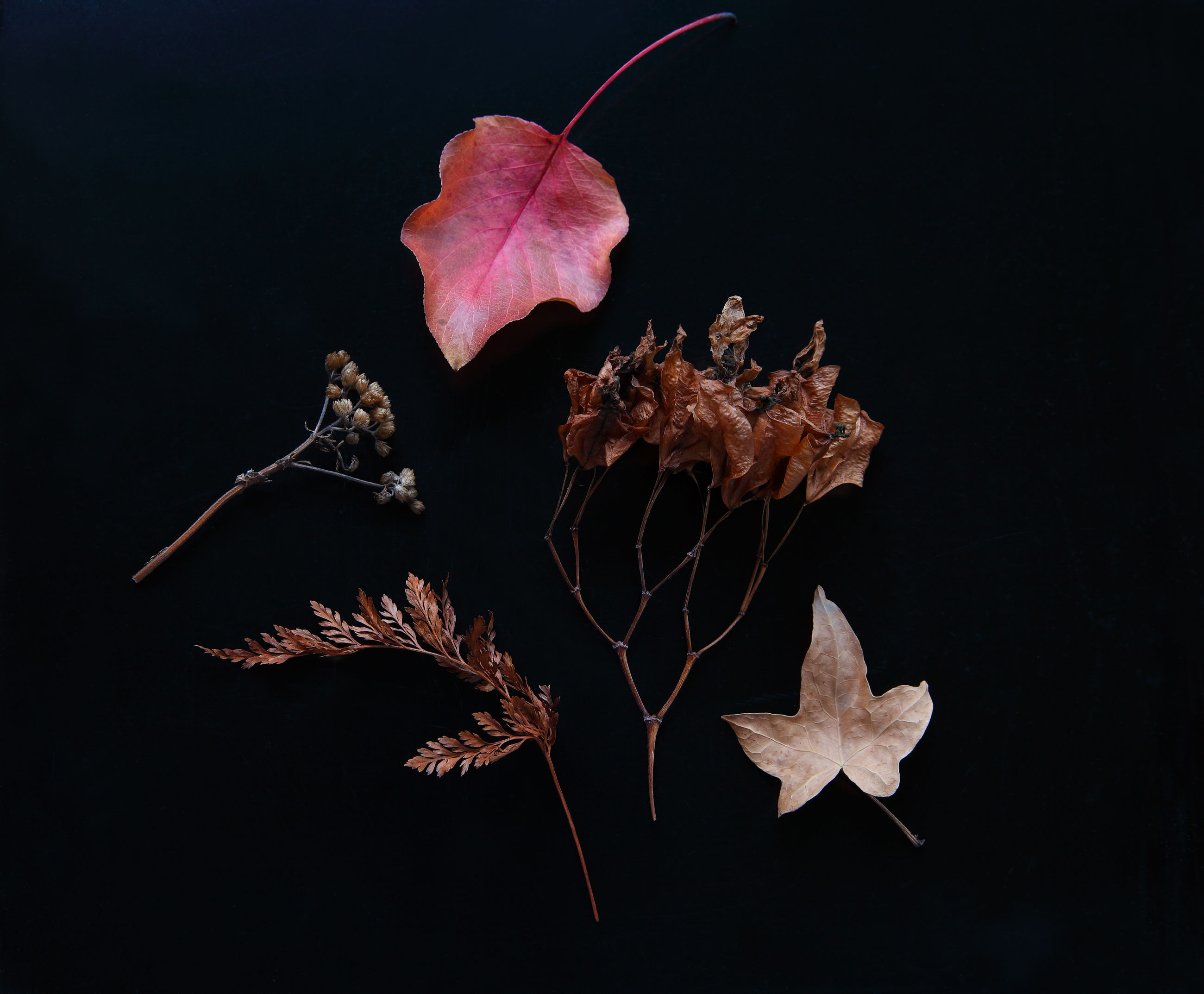 An arrangement of autumn leaves, seed pods and fern frond on a dark background