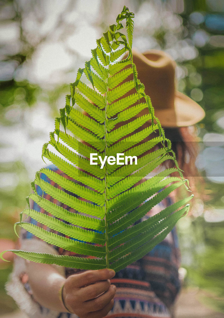 Low Angle View Of Woman Holding Fern